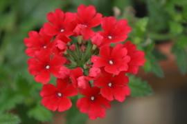 Ziergartentipps Fur Rosen Teich Gartenbewasserung Rasenpflege